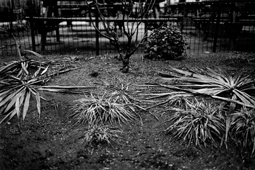 smashed_plants_mar08.jpg