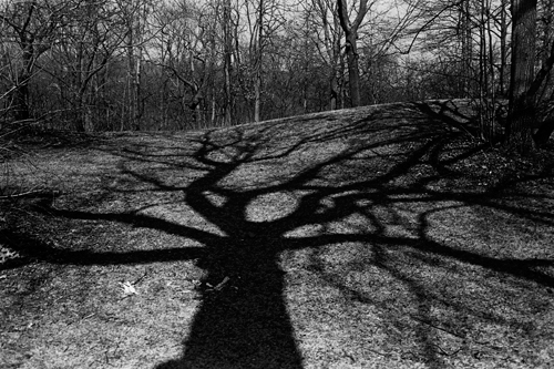 tree_shadow_mar08.jpg